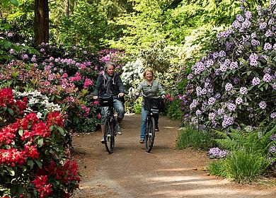Paar radelt durch blühende Rhododendren im Rhododendronpark Gristede